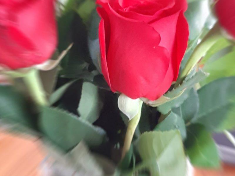 2020-11 - AnnePrescott (Défi) - Roses