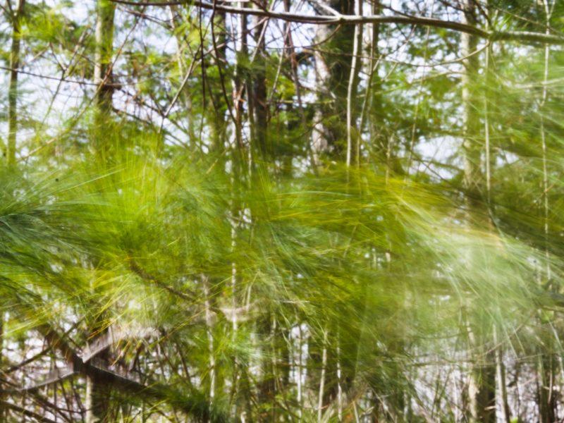 2021-03 Anne Prescott (Défi) - Il vente dans le pin